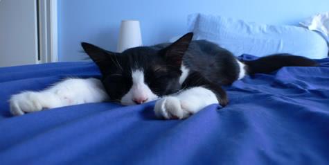 Portnoy enjoys his nap.